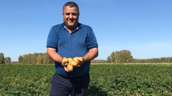 Новосибирцы вырастили картошку для чипсов Lay's. В PepsiCo объяснили, зачем это делать в Сибири