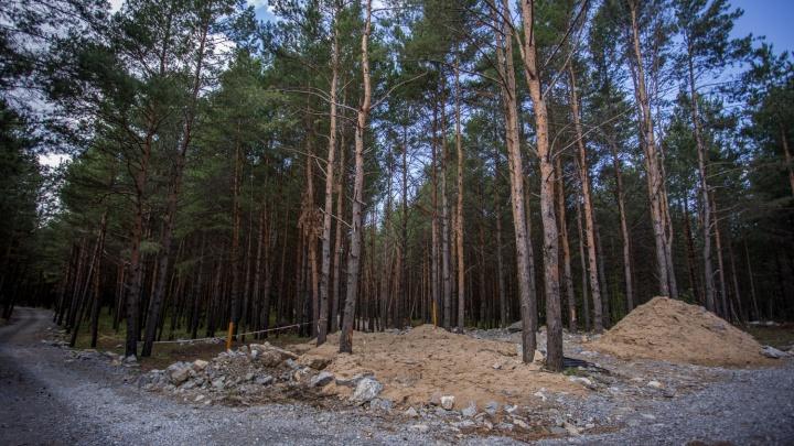 Подошел сзади и зарычал: мужчина в маске медведя напугал сибирячку в лесу — теперь им занимается полиция
