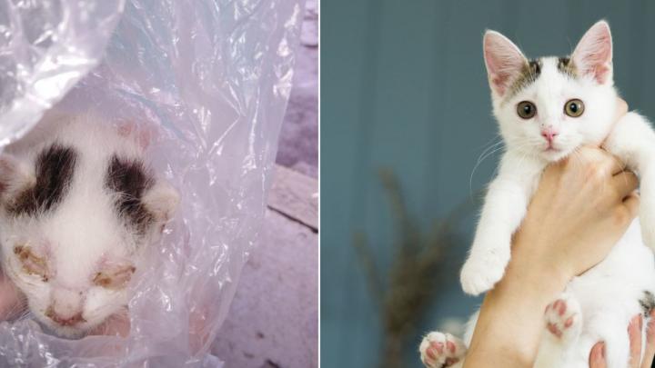 Пельмень и Черника. Смотрим на котиков, которых выходили в челябинском приюте (до и после)