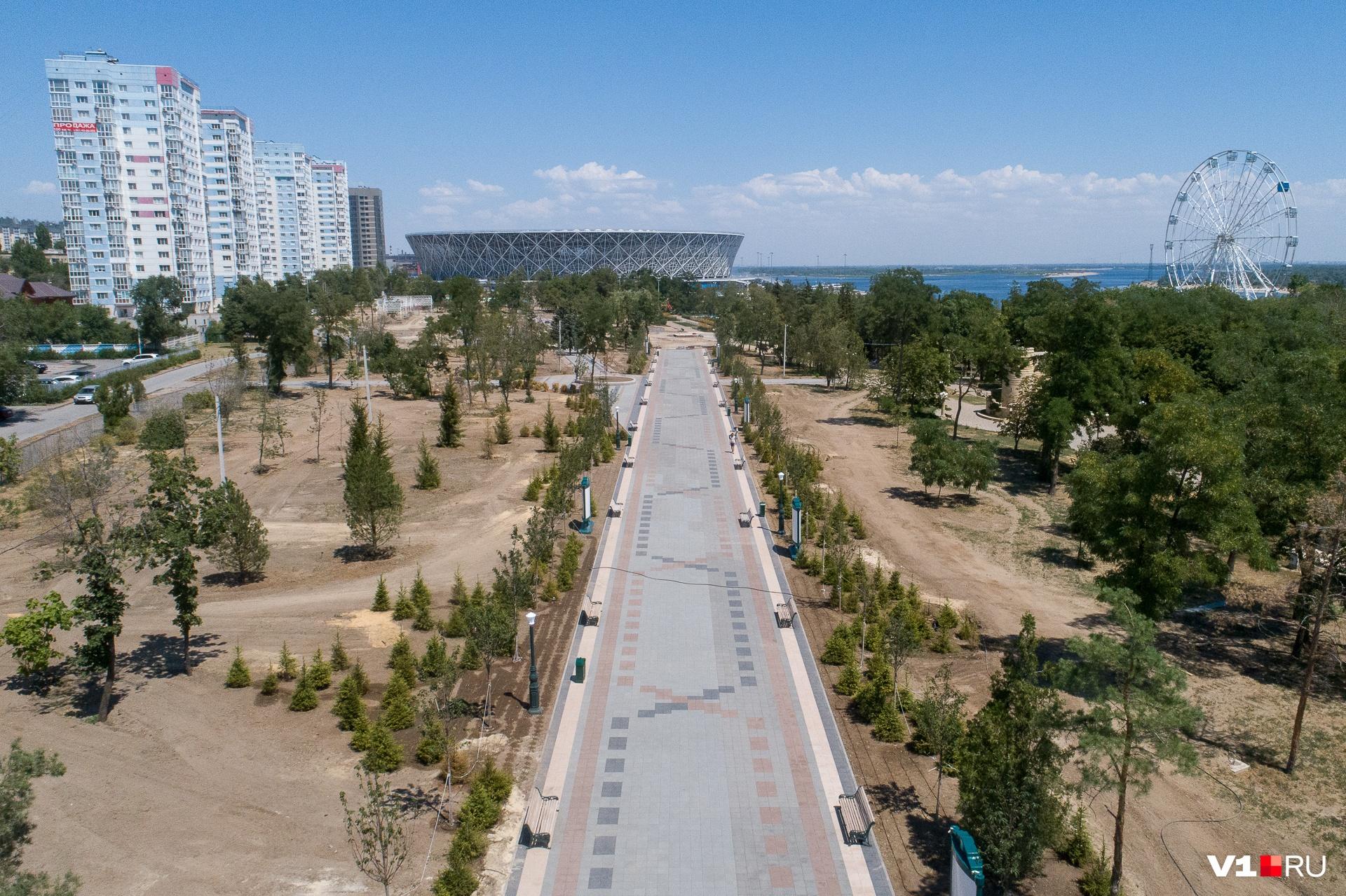 Первым делом в парке вырубили большинство многолетних деревьев и кустов