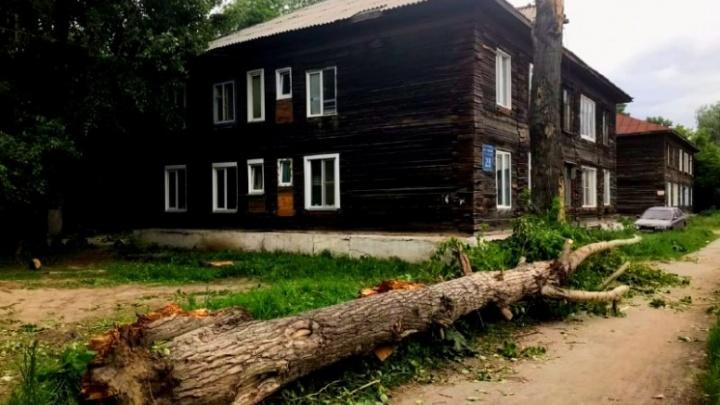 Смерть новосибирца от тополя: чиновники назвали падение ветки несчастным случаем, следователи не согласны