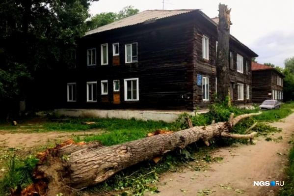 Во второй половине дня 26 мая во время урагана ветка тополя обрушилась на 59-летнего мужчину. От полученной травмы он умер дома почти сразу после инцидента<br><br>