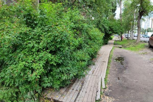 Большая часть мостков скрыта кустарниками, такое встречается не только на улице Урицкого