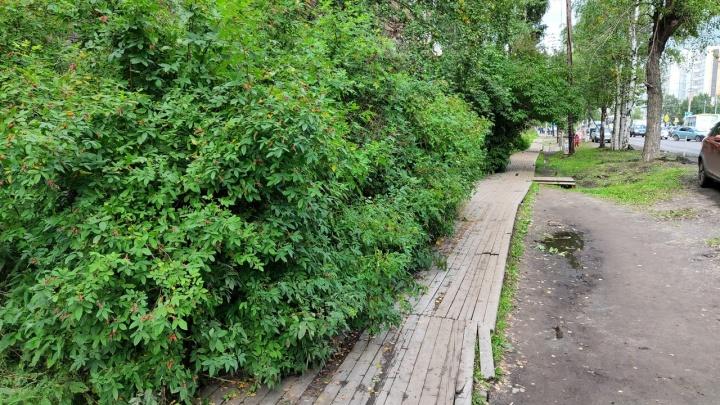 Туристическая фишка или позор города? Архангелогородец — про наследие в виде деревянных мостков