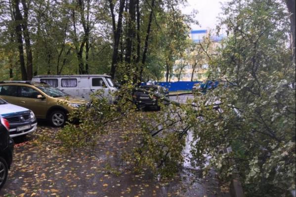 В данном случае дерево упало не на машину, однако кому-то повезло меньше