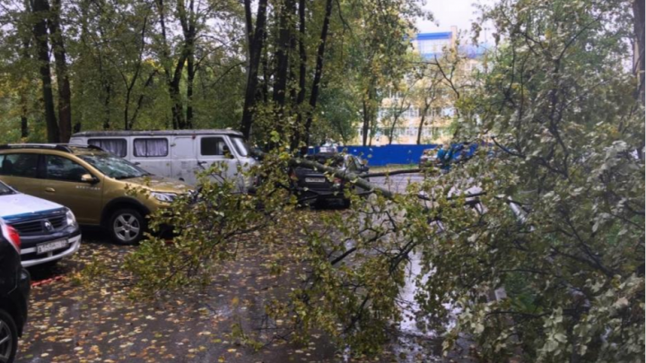 В Уфе упавшие деревья разбили несколько машин