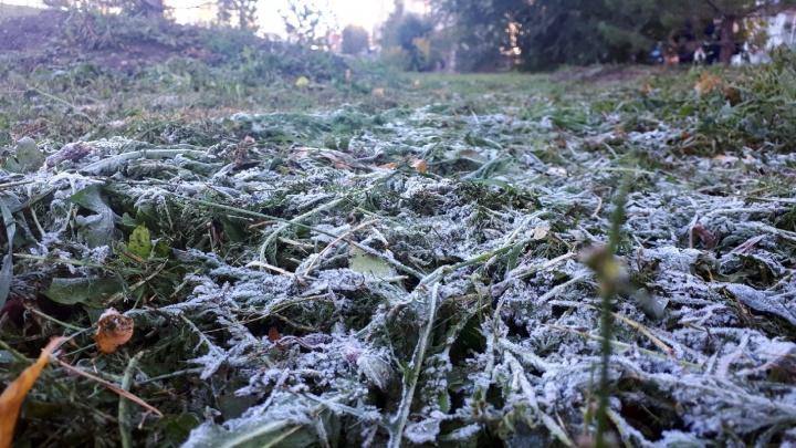 В Омской области спрогнозировали ночные заморозки