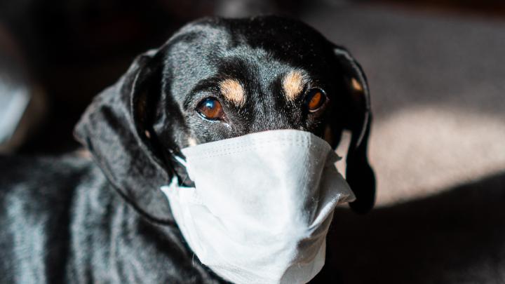 Омские филологи разбирают коронавирус по слогам: хроника пандемии