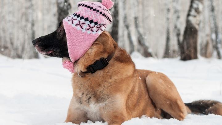 Челябинск в выходные накроет снегом, а потом нас ждёт похолодание