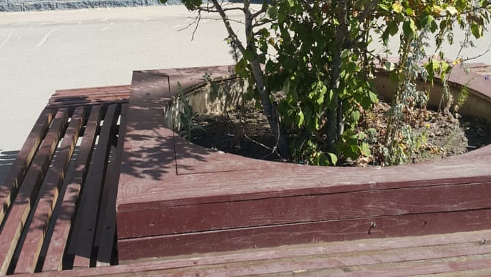 Уфимец пожаловался, что мэрия запустила деревья в центре города