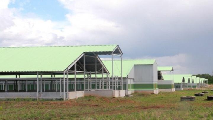 Самарские власти отказались вкладывать деньги в Сергиевскую птицефабрику без инвестора