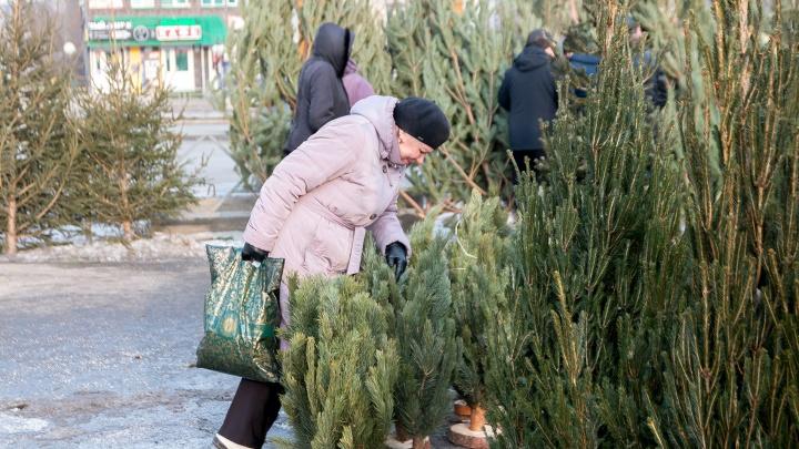 В мэрии рассказали, когда на улицах Самары начнут торговать елками