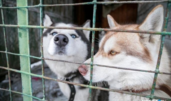 Мэрия Красноярска объявила торги на аренду земли в Солнечном для создания приюта для животных