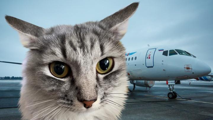 В Тюмень самолетом из Салехарда доставили на операцию кота