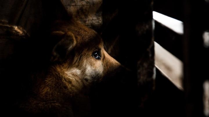 В Курганской области выявили два очага бешенства животных