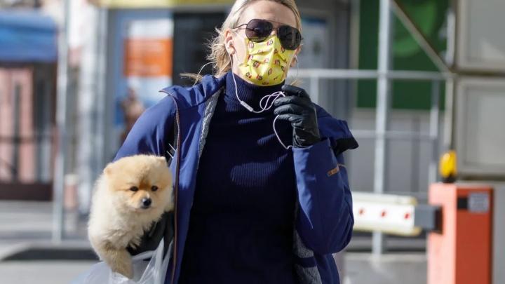Показываем палату в инфекционке и делимся адресами, где есть маски. Хроника коронавируса в Тюмени