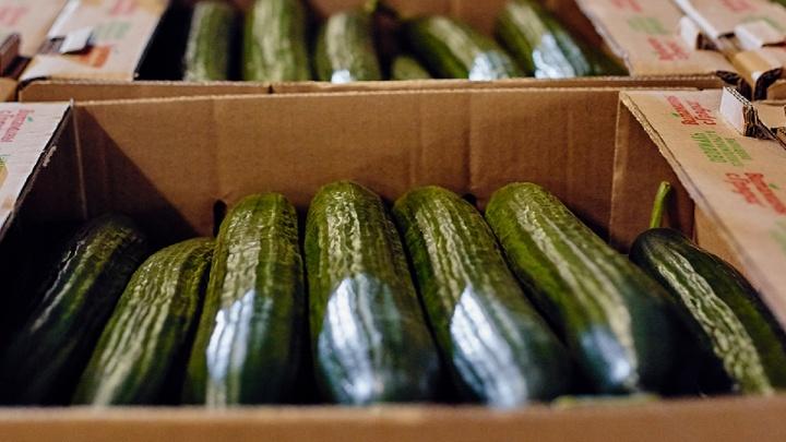 Агрохолдинг «Чурилово» предоставит пенсионерам 3 тонны овощей в качестве благотворительной помощи