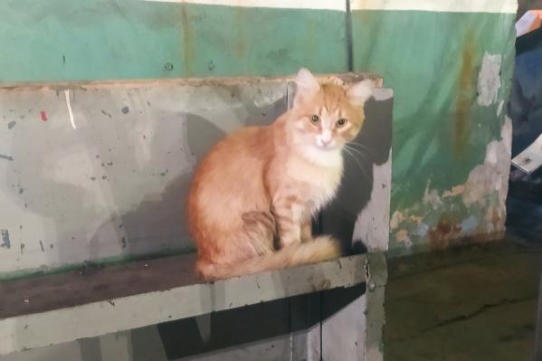 Кот-путешественник приехал на трамвае в депо