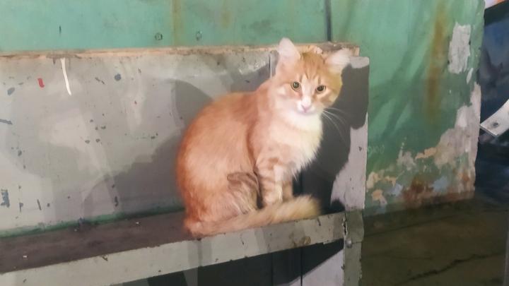 В Ярославле кот уехал от хозяев на трамвае в другой конец города
