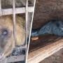 Прокуратура проверит зоопарк в Таганроге после жалоб на жестокость к животным