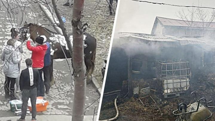 «Пылало так, будто облили бензином»: подробности страшного пожара, в котором погибли 12 лошадей