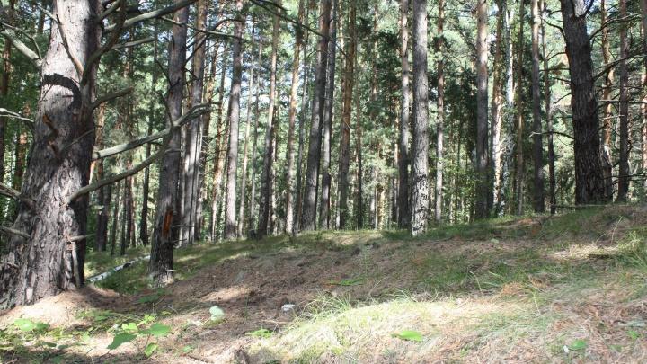 В Кургане ввели запрет на посещение лесов