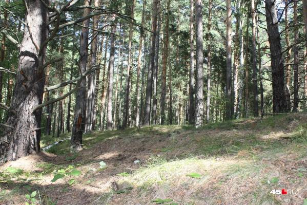 Попасть в лес будет нельзя до 29 июля