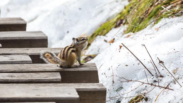 Самый холодный месяц — ноябрь. На «Столбах» рассказали об аномалиях зимы