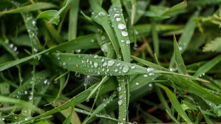Нижегородцев ожидают тёплые и дождливые выходные