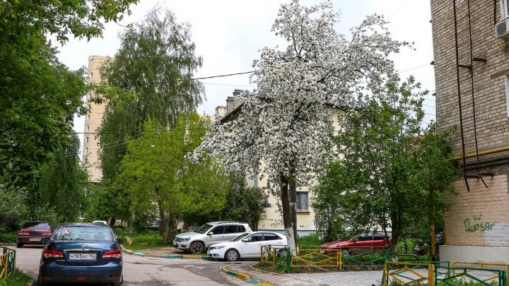 То дождь, то солнце: в эти выходные в Нижнем Новгороде ожидается переменчивая погода