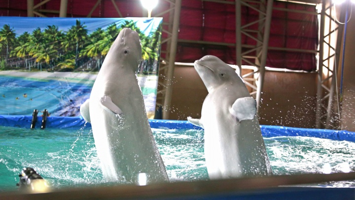 Депутаты Курултая предложили запретить дельфинарии, цирки и передвижные зоопарки