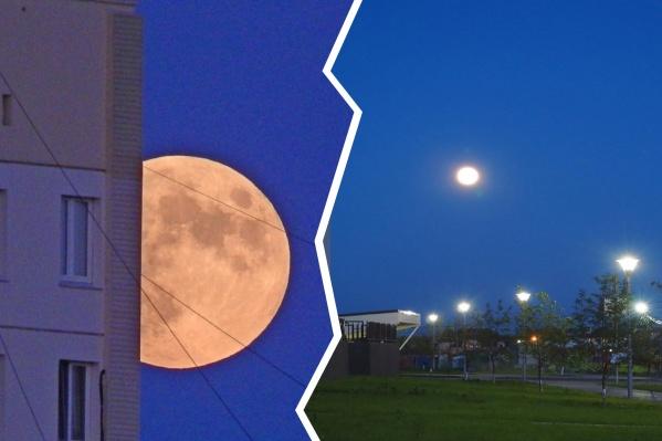 Тюменцы смогли сделать десятки ярких и необычных снимков. Мы выбрали самые запоминающиеся кадры «земляничной» луны