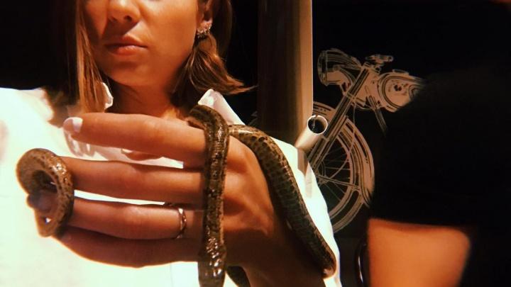 «Лучше бы ядовитая была»: из кальянной в центре Екатеринбурга украли змею по кличке Камасутра