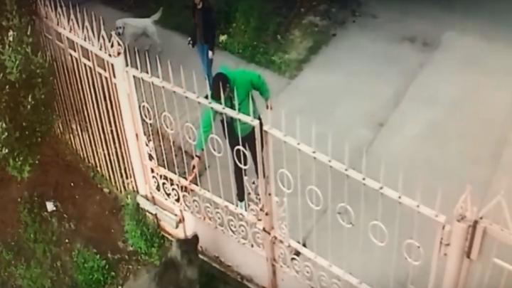 В Архангельске парень покрасил собаку из баллончика. Владельцы животного опубликовали видео