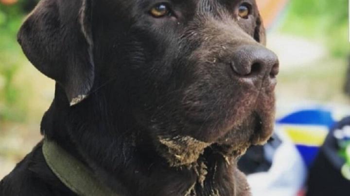 Под Волгоградом догхантеры отравили домашнего пса