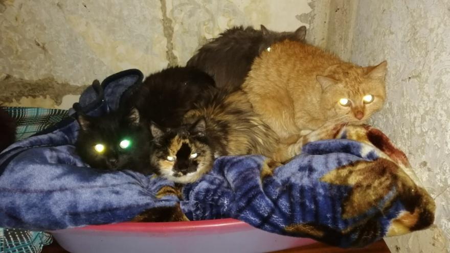 В Екатеринбурге ищут владельцев для 15 кошек, у которых умерла хозяйка