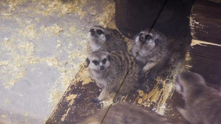 Стало известно, как будет выглядеть зоопарк в Башкирии