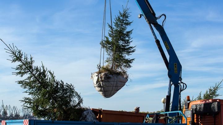 Омичи выиграли грант на создание «Сада памяти» из 27 миллионов деревьев