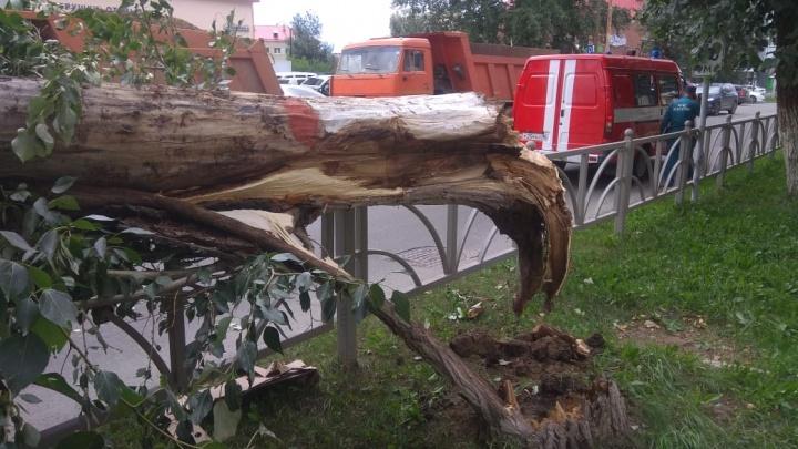 Ждать ли нового урагана? В МЧС рассказали, какие разрушения нанес штормовой ветер в Екатеринбурге