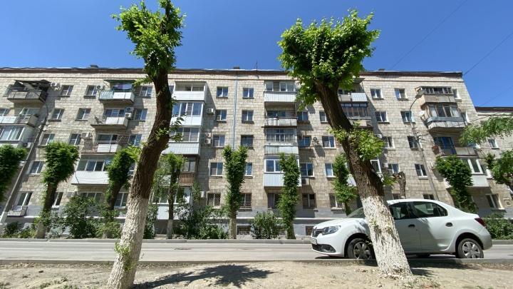 В Волгограде зазеленели обрубленные коммунальщиками кочерыжки: смотрите, как это выглядит