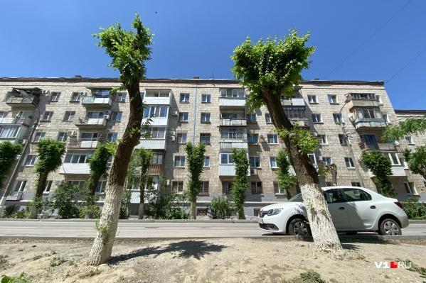 По словам чиновников и коммунальщиков, вскоре у обрезанного дерева откроется «второе дыхание»