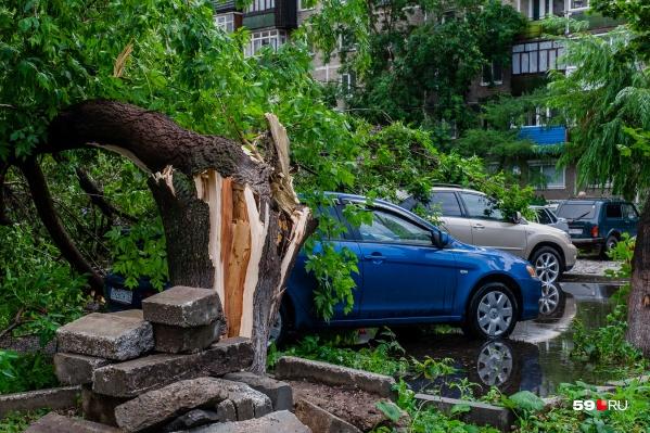 Последствия сильного ветра могут быть и такими, так что не стоит парковать машину у деревьев