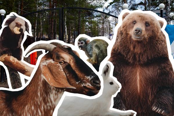 Зоопарк «Сосновый бор» — частный, он существует благодаря посетителям<br>