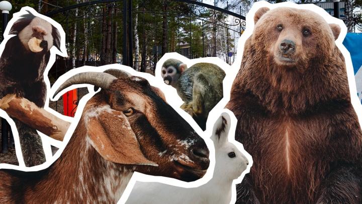 «Гуманитарная» помощь для зверей: тюменцы обеспечили частный зоопарк комбикормом, фруктами и овощами