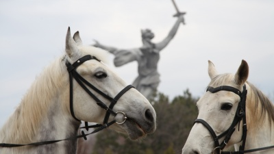«Стали такими же популярными, как белочки»: как на Мамаевом кургане живут и работают полицейские лошади