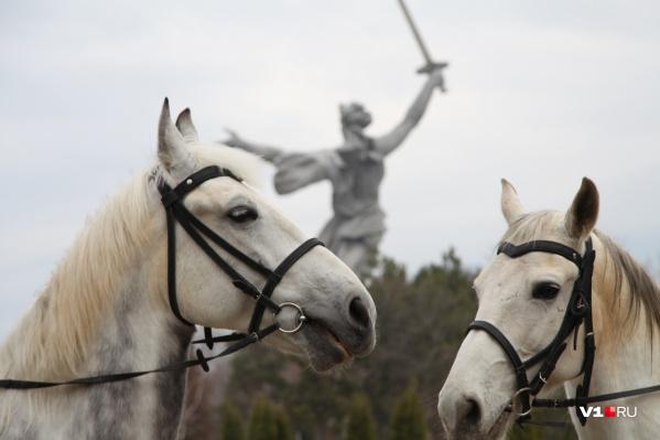 Каждый день полицейские привозят лошадей на коневозах