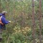 «В стране исчезает лес»: в УЛК рассказали, как внедряют на предприятии интенсивную модель лесопользования