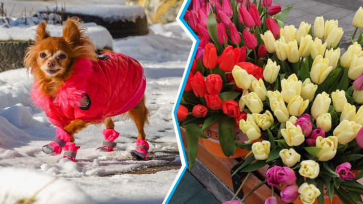 Лучшие фото этой недели: гламурная весна и Нижний Новгород, утопающий в цветах