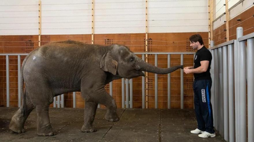 Ростовский зоопарк исключили из Евроазиатской ассоциации после передачи слоненка в цирк