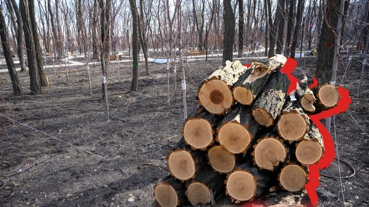 Пена на деревьях и разрушенные дорожки: как благоустраивают парки Ростова и что из этого выходит